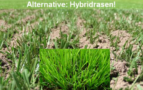 intergreen report 2018 02 hybridrasen forschung 01 intergreen rts